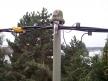 Umstellung auf NFA2X mit Dachständer-Anschluß